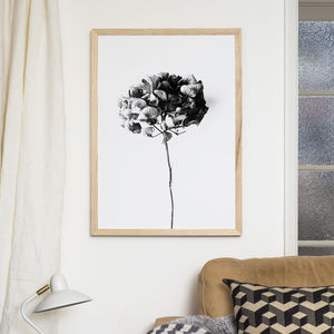 Plant Hydrangea Print - the new natural