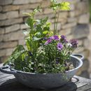 Table Top Galvanised Planter