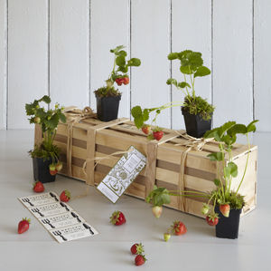 Grow Your Own Strawberry Jam Gardening Gift - gardener