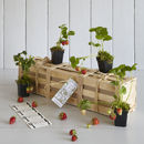 Grow Your Own Strawberry Jam Gardening Gift