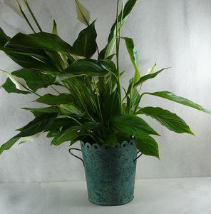 Green Metal Plant Pot
