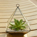Fat Pyramid Glass Vase Succulent Terrarium Kit
