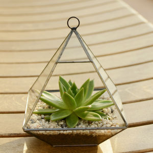 Geometric Glass Vase Succulent Terrarium - plants & trees