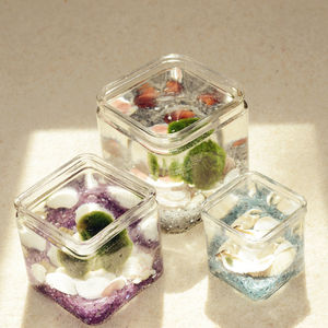 Marimo Moss Ball Glass Cube Terrarium - flowers & plants