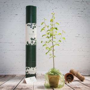 Sacred Silver Birch Tree Gift - shop by occasion