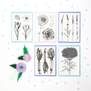 Set Of Five Illustrated Flower Recipe Notecards - shop by category