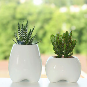 Ceramic Tooth Shaped Planter - home accessories