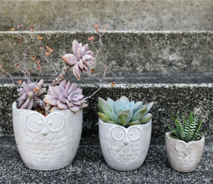 Concrete Owl Planter - gifts for gardeners